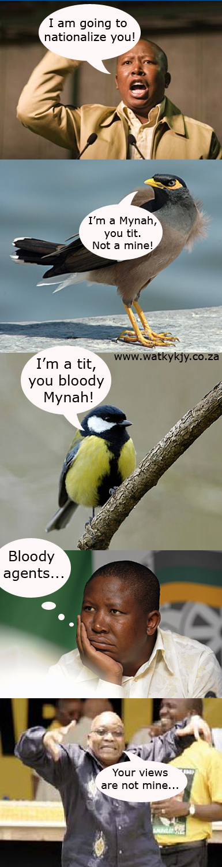 mynahtit