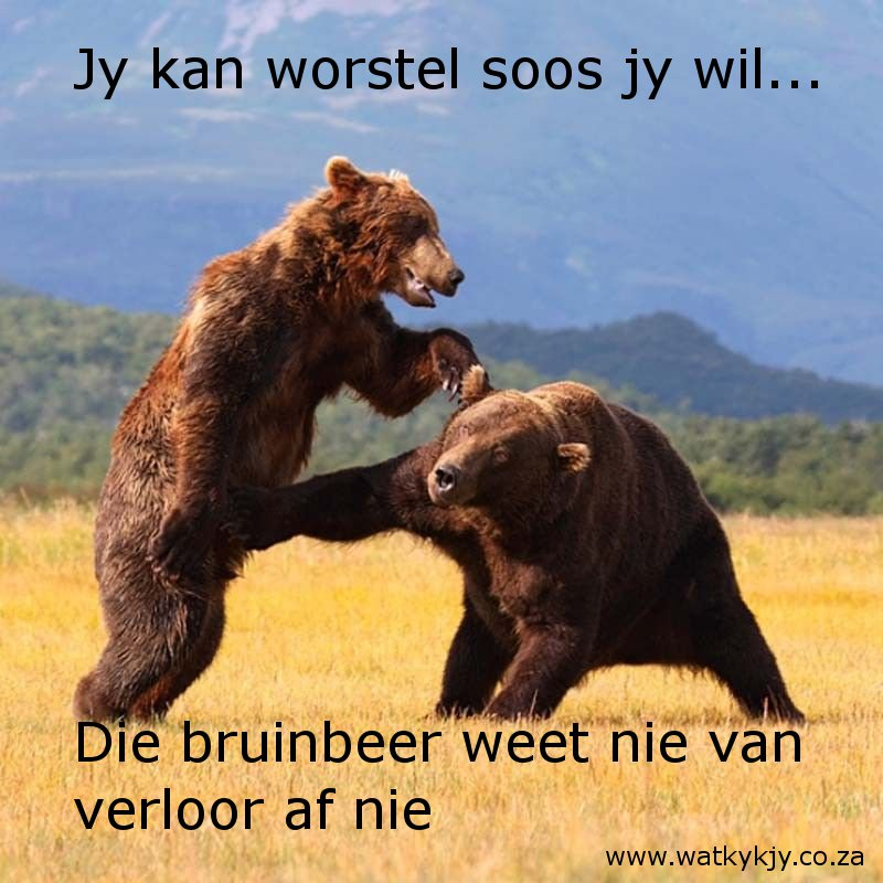 bruinbeer