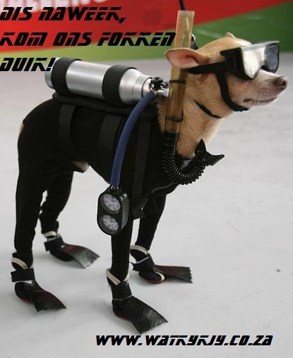 hond duik