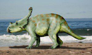 Vagaceratops_NT