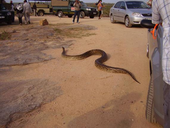 kruger park snake 3