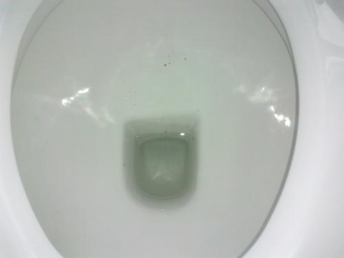 legit-toilet-2