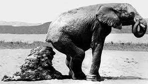 oom olifant jou reuse dier