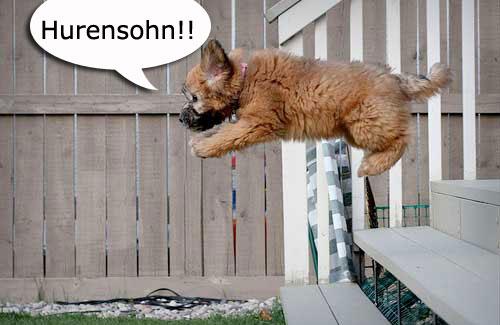 flying-puppy