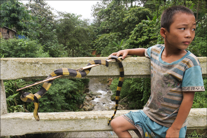 Vietnamese Kid With a Snake Near Sapa Blog