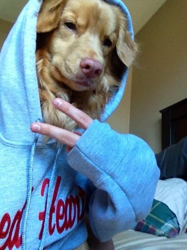 selfie hond
