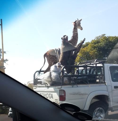 pretoria-noord-stuffed-giraffe