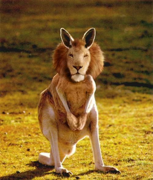 kangaleeu