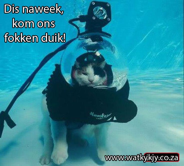 duik en skiet katte