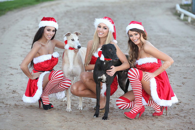 NO-FEE-XMAS-AT-THE-DOGS19