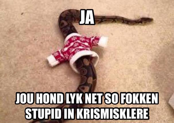 zef slang