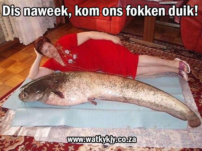watkykjy-ruik-soos-poes-of-vis
