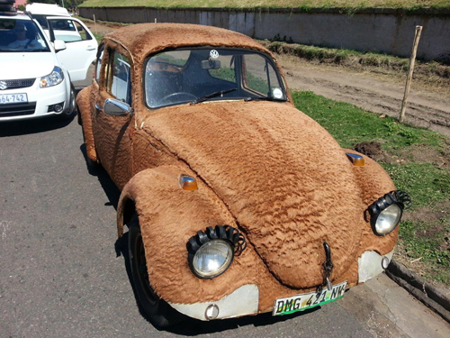 Furry Beetle (1)