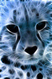 cheetah blues