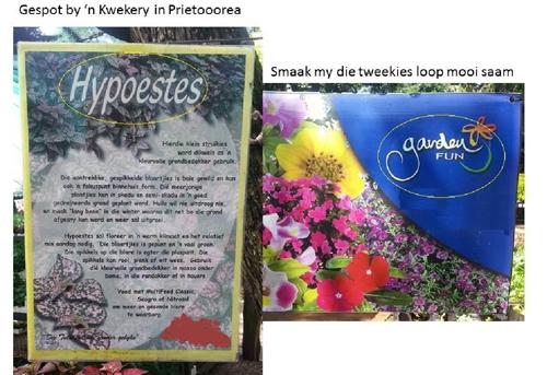 hypoestes